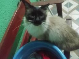 Gato Macho faço doação!