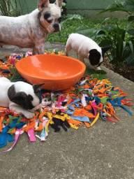 Vendo filhotes de Bulldog Francês 4macho/1fêmea 60 dias