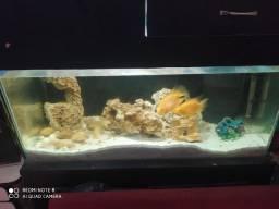 Vendo aquário barato