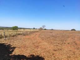 Fazenda com 81 alqueires à venda em Monte Alegre de Minas
