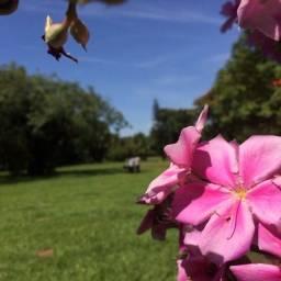 Cemitério Parque das Primaveras