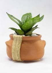 Vaso decorado com planta inclusa