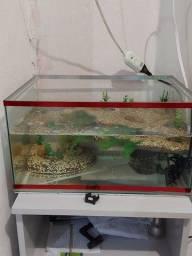 Aquaterrario completo