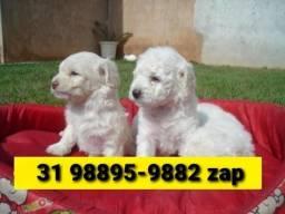 Título do anúncio: Canil Líder Filhotes Poodle Basset Lhasa Yorkshire Beagle Shihtzu