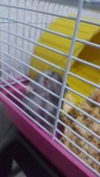 Gaiola com a hamster