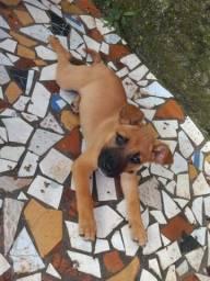 Filhote de cachorro fêmea para doação