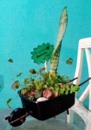 Vasos reciclados com plantas a partir de 15 reais