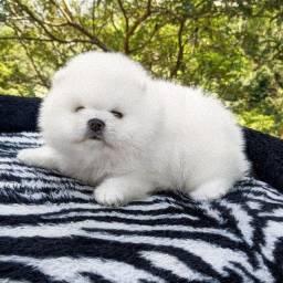 Lulu Da Pomerania/Baby Face