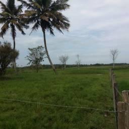Sítio - Ilha Preta
