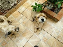 Cachorro p doação