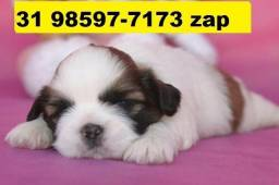 Canil Filhotes Cães Pet BH Shihtzu Poodle Lhasa Beagle Yorkshire Maltês Bulldog Fox