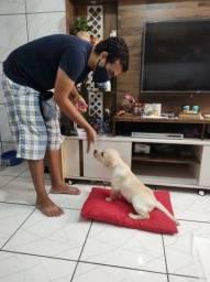 Adestramento positivo de cães em domicílio ou on-line!