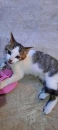 Gatinha resgatada para adoção