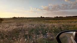 Campo de Pecuária 43 hectares