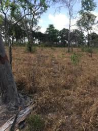 Fazenda terras brutas ou preparadas para plantio