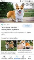 Linda cadela