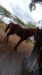 Cavalo de 3 anos preço a negociar