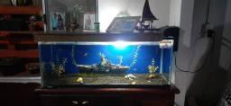 Aquario completo