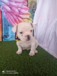 Bulldog Francês com Entrega Imediata