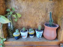 Lindos cactus