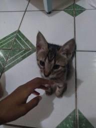 Filhote de gato pra adoção