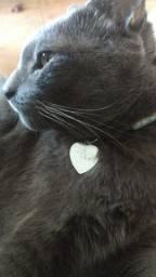 Coleirinhas Identificadoras para cães e gatos