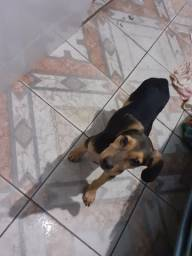 Cachorro(cadela)
