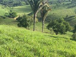 São Benedito do Sul-Vend. 10 P/ Hect=Fazenda com 800 Hectares Pronta