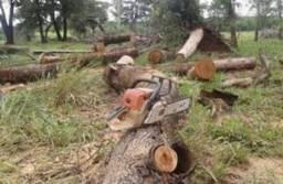 Cortas e poda de árvores