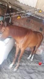 Cavalo baxeiro