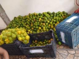 Vende-se laranjas