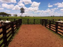 Fazenda 146 alqueires em pasto - região de General Salgado - F210203