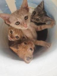 Gatos SRD