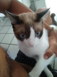 Doando um gatinho de nome Maui
