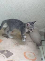 Estou doando esses gatinhos pois não tenho condições de cuidar