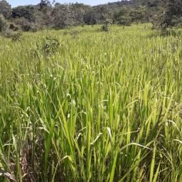 Fazenda/Chácara 10 Alqueires em Piracanjuba - Goiás