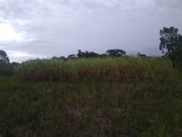 Plantação de Cana de açúcar!