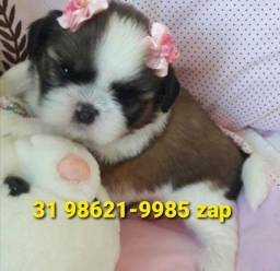 Título do anúncio: Canil em BH Filhotes Cães Top Shihtzu Beagle Maltês Pug Poodle Lhasa Yorkshire