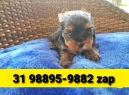 Título do anúncio: Canil Filhotes Pet Yorkshire Basset Lhasa Poodle Beagle Pug Shihtzu Maltês