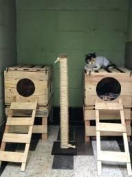Casinhas para gatos e arranhadores