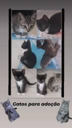 Adoçao responsavel de gatos