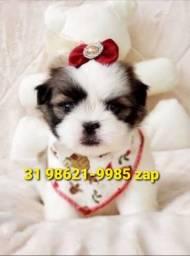 Título do anúncio: Canil Filhotes em BH Shihtzu Yorkshire Basset Lhasa Poodle Maltês