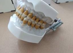 Manequim Odontológico de periodontia Marília
