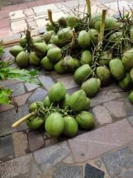 Coco verde Guarapari 1 real - Promoção