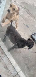 Dois filhotes