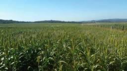 Fazenda 52 Alqueires | na lavoura | 100km Goiânia | 100km Rio Verde