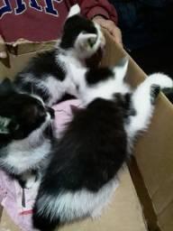 Gatos filhotes doa-se