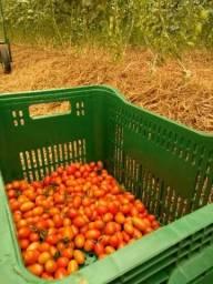 Tomatinho Cereja Orgânico