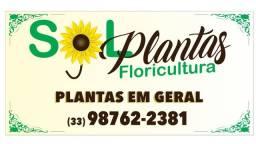 Floricultura Sol Plantas - Nanuque