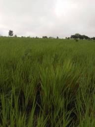 Título do anúncio: Fazenda em Colinas do Tocantins - TO